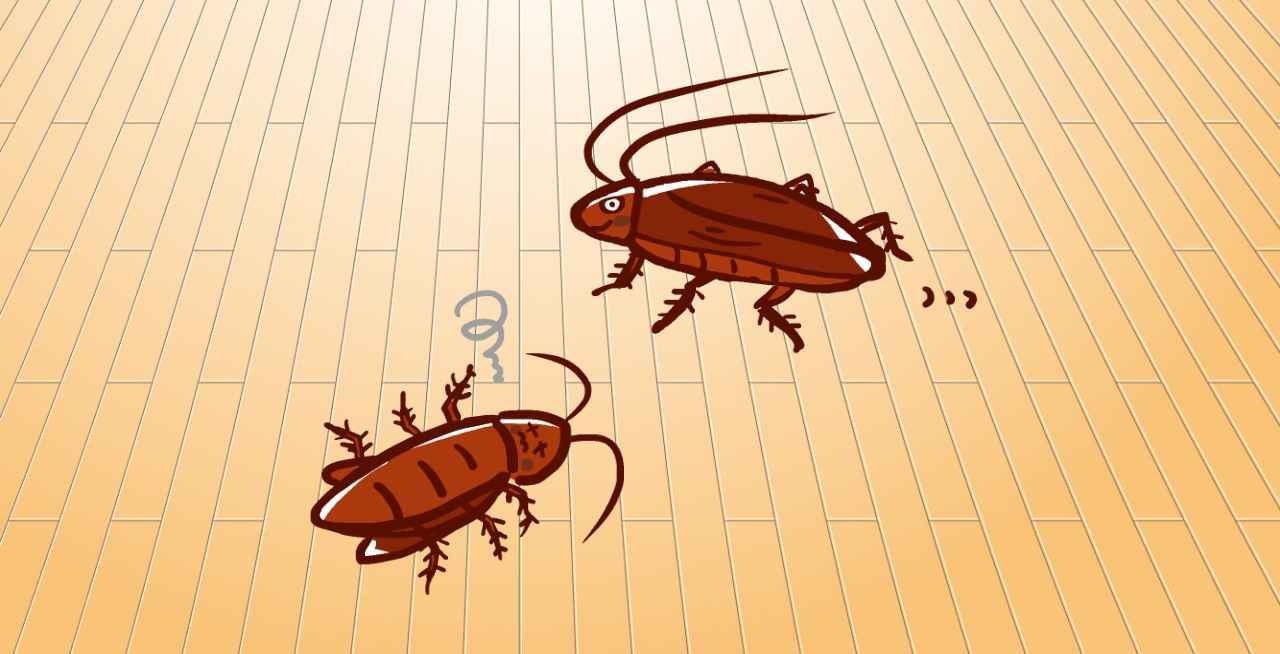 ワンルームにいるゴキブリ