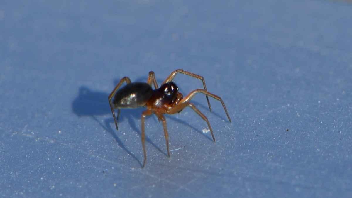 蜘蛛を殺さないのは理由があるの?殺していいのは朝夜どっち?